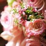 Available yearly:  mixed pinks